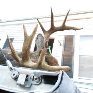 ten point buck trophy